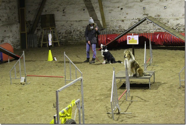 2 Hunde im Parcours